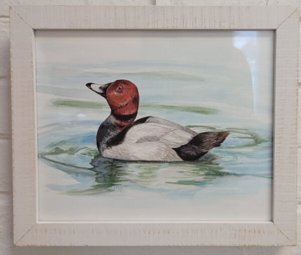 Colleen Tiefenthal - Ruddy Duck - $65